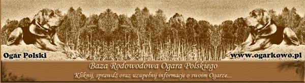 ogarkowo.pl